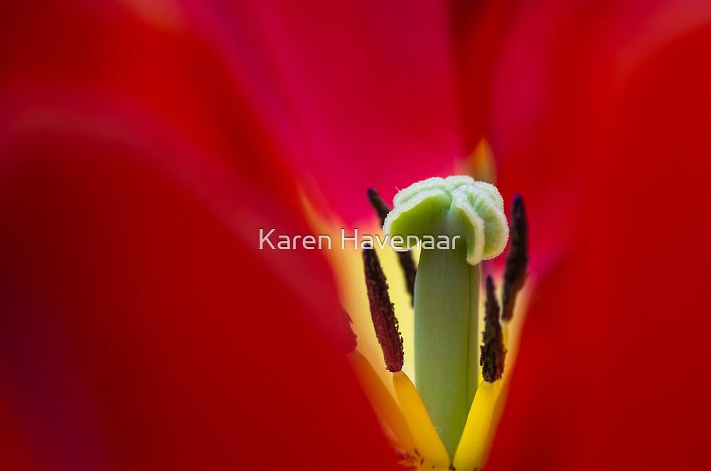 Framed by Karen Havenaar