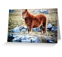 Beautiful Pony in Rocky Landscape Greeting Card