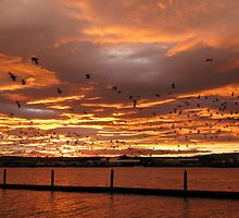 Sunset in Tauranga, New Zealand by Jola Martysz