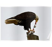 Bald Eagle Part Of Nature Poster