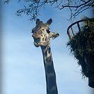 Giraffe by amyschuldies