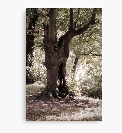The Ghost Tree Canvas Print