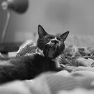 Morning Yawn by Danielle  La Valle