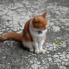 Art Gallery Cat by Danielle  La Valle