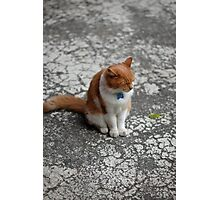 Art Gallery Cat Photographic Print