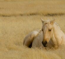 Golden Grass & Golden Horse by Kent Keller