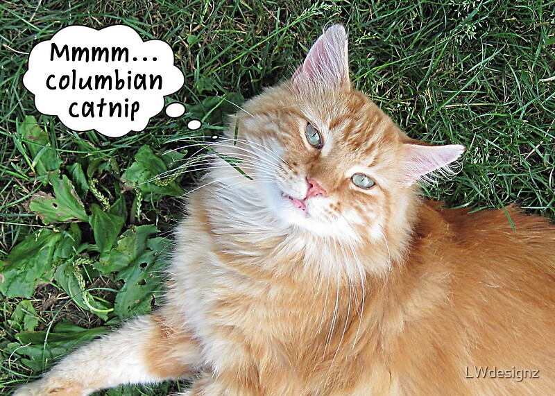 How Long For Cats To Get High On Catnip