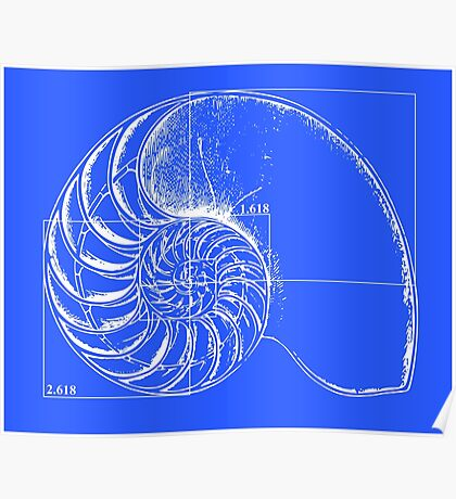 Fibonacci on a nautilus shell (blue) Poster