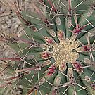 cactus by seagrass-cowes