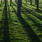 Spring shadows by Javimage