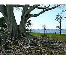 The Big Old Tree Photographic Print