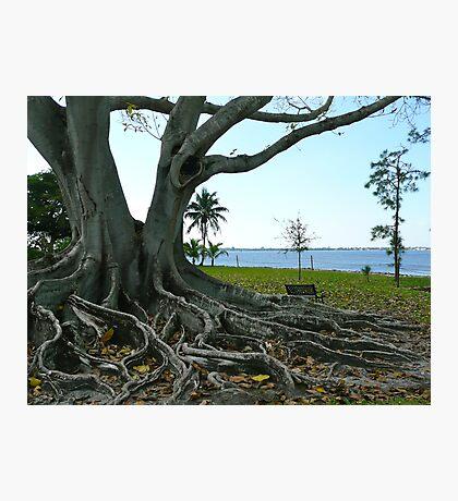 The Big Old Tree Photographic Print