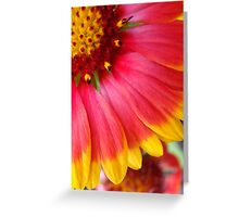 Blanket Flower ~ Gaillardia Greeting Card