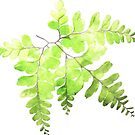 Fern Leaf in Watercolor by kaazuclip