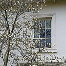 White Magnolia On White Walls by Fara