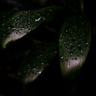Rain Drop Leaves by pratt1ak
