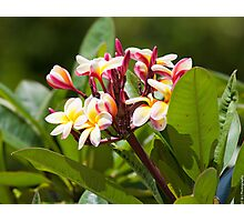 Flowers of Hawaii Photographic Print