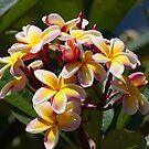 Flowers of Hawaii by thruHislens .