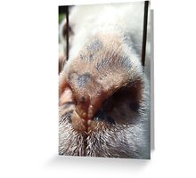Nosey Goat Greeting Card