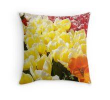 Tulip Flowers Festival Art Prints Yellow White Tulips Throw Pillow