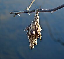 Mobile Home - Bagworm on Multiflora Rose by MotherNature