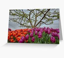 2013 Skagit Valley Tulip Festival Greeting Card