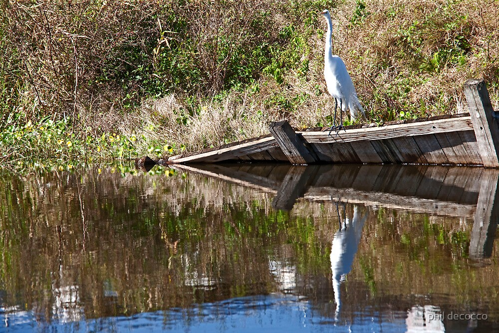 Egret Reflection by phil decocco