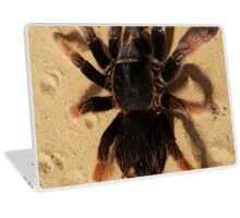 Brown Tarantula Spider Laptop Skin
