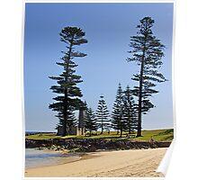 Norfolk Pines, Norfolk Island. Australia. Poster