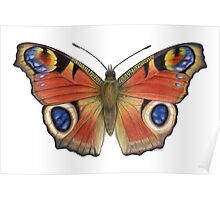 Peacock Butterfly (Inachis io) Poster