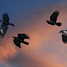 As The Crow Flies by byronbackyard