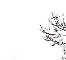 All relevant titles were pretentious, it's a bare cherry blossom tree with a white background, take it or leave it by mashdown
