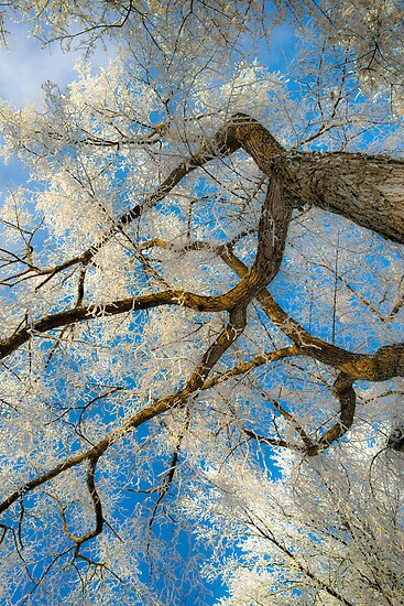 Winter Beauty XIII by Ian McGregor