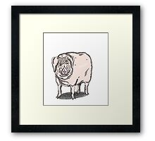 Pig 1 Framed Print