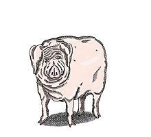 Pig 1 Photographic Print