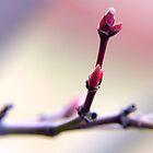 Buds  by Lorna Taylor
