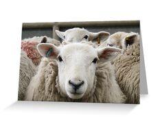Sheepish - Follow ME Greeting Card