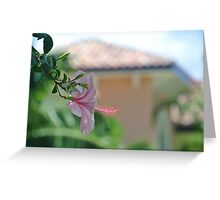 Turks and Caicos Tropical Pink Greeting Card