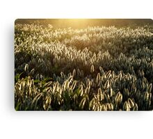 Enlightened Crowd Canvas Print