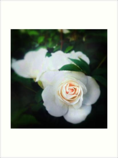 Rose by Anne  McGinn