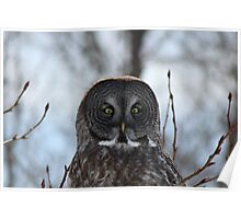 The Great Gray Owl Poster