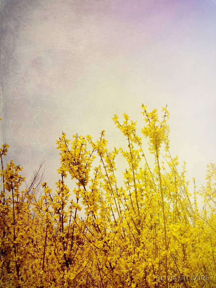 Sun Kissed Yellow Flowers by Olivia Joy StClaire