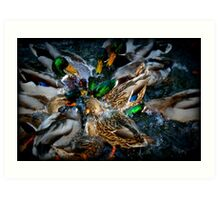 Diving Ducks Art Print