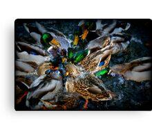 Diving Ducks Canvas Print