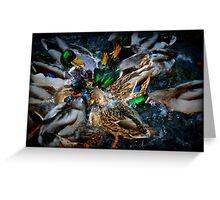 Diving Ducks Greeting Card