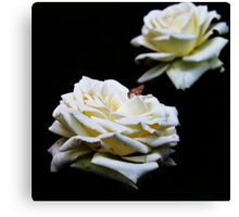 Wit Roos (White Rose) Canvas Print