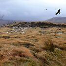 Eagles at Rannoch Moor, Scotland by Sally Green