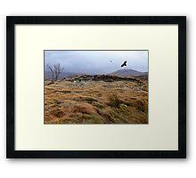 Eagles at Rannoch Moor, Scotland Framed Print