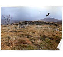 Eagles at Rannoch Moor, Scotland Poster