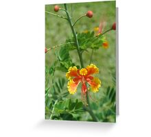 Turks and Caicos Succulent II Greeting Card